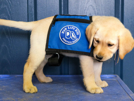 Service Dog Awareness Month: What is a Service Dog?