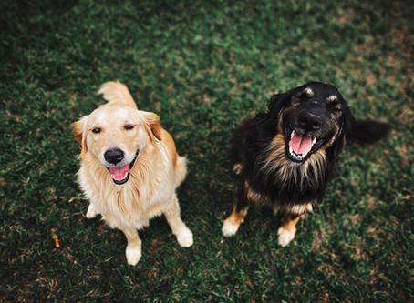 7 Fun Tricks to Teach Your Dog