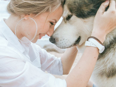 7 Signs Your Dog Loves You
