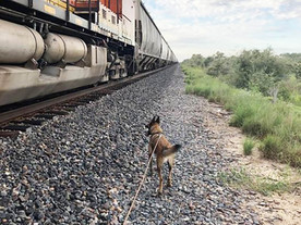 30 immigrants removed from a Freight train