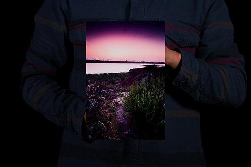 Purple Wetlands 8x12 Metal