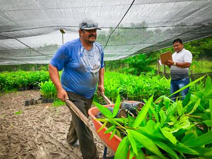 Secretaria de Agricultura realiza entrega de mudas para agricultores do município
