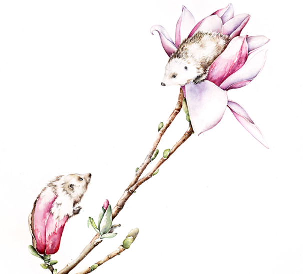 magnolias blooming hedgehogs