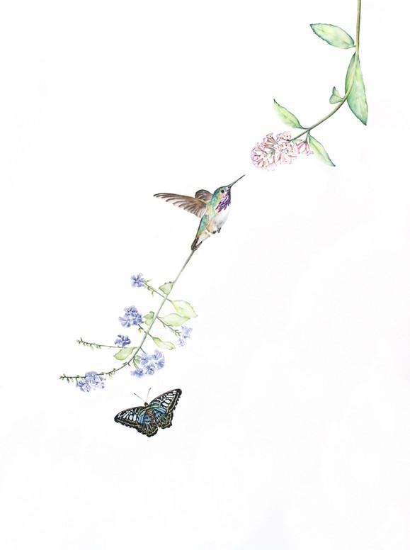 Bird of Paradise #19