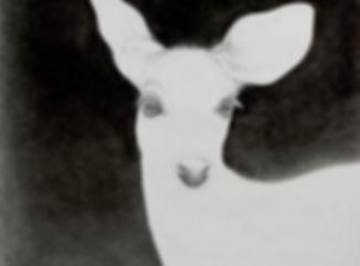 wide eyed deer
