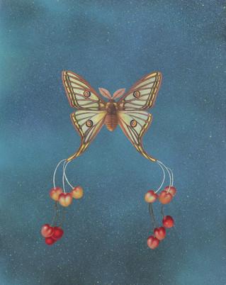 Fruit Moth #1