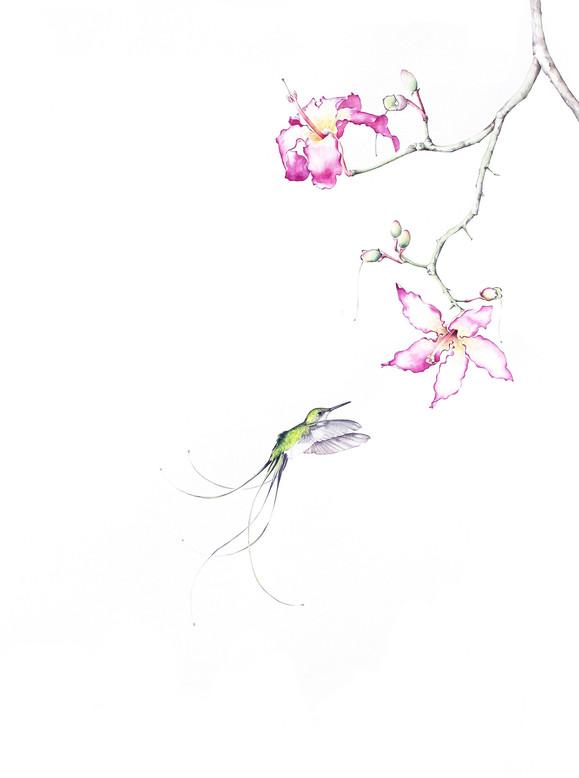 Bird of Paradise #12