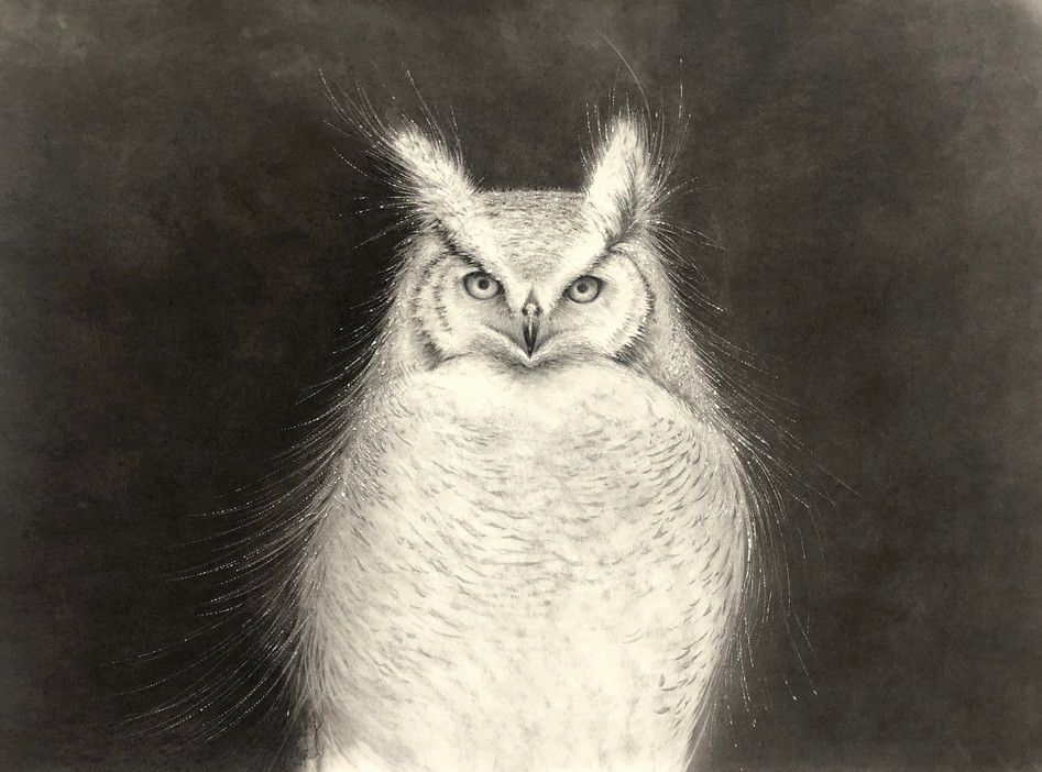 Wise Owl