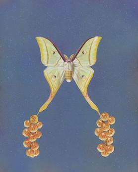 Fruit Moth #3
