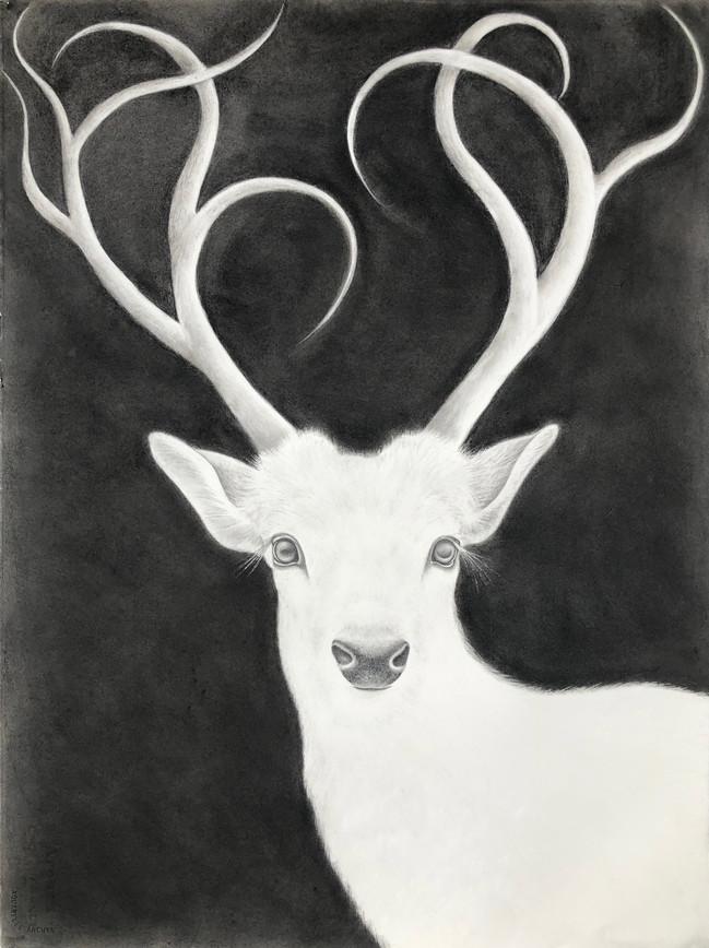 White Stag #2