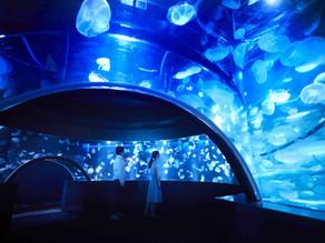 【京都】大人気の「京都水族館」のチケット付プラン販売中♪