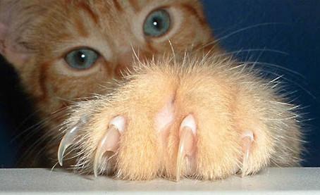 9 arsye perse nuk duhet te hiqen kthetrat (thonjte) e maceve