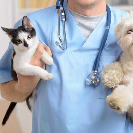 Sterilizimi: Përse është i domosdoshëm?