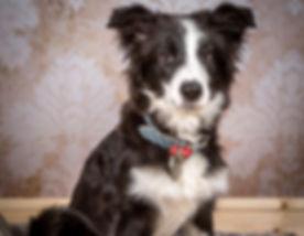 my pup.jpg