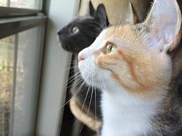 Our cats, Kızım & Oğlum