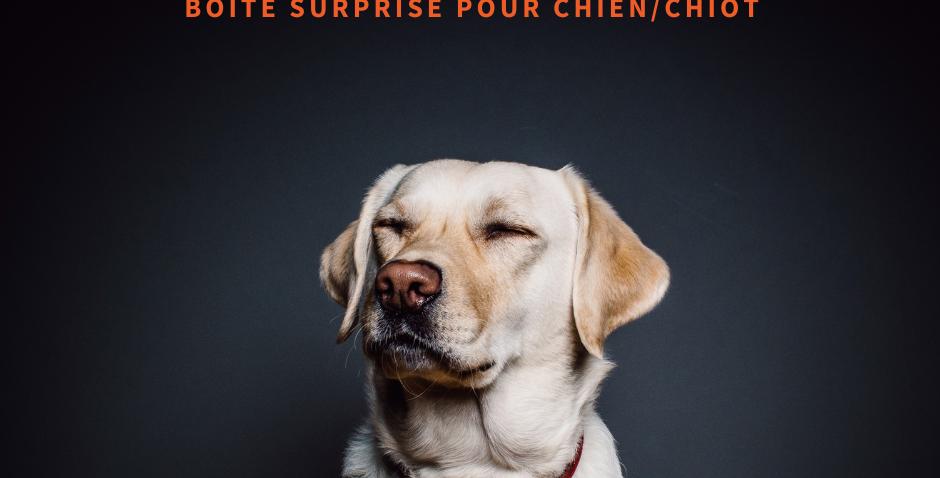 NourriCru - Boîte surprise pour chien et chiot