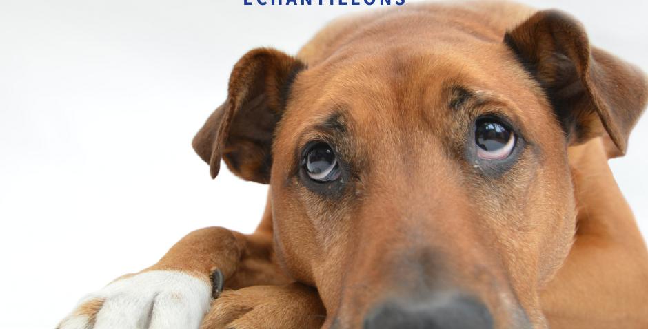 NourriCru - Bon départ pour chien ÉCHANTILLONS CRUS