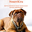 Thumbnail: NourriCru - Boîte surprise hypoallergénique pour chien et chiot