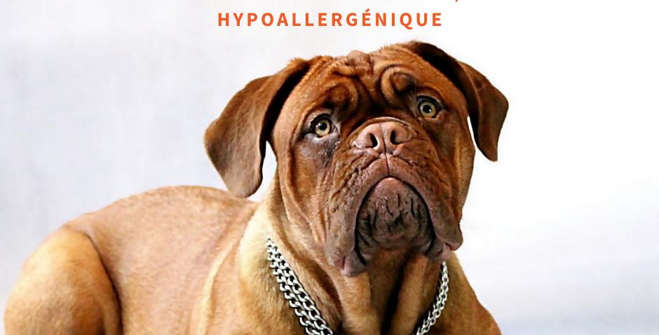 NourriCru - Boîte surprise hypoallergénique pour chien et chiot