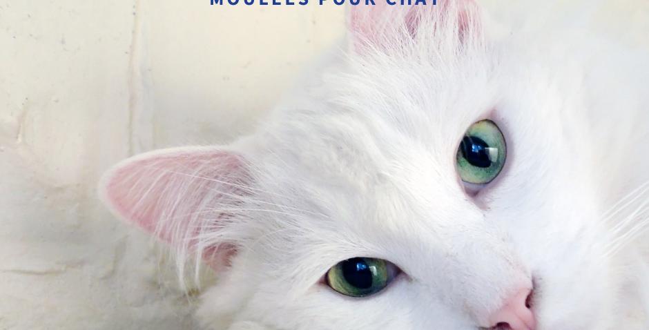 NourriCru - Bon départ pour chat ÉCHANTILLONS MOULÉES