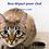 Thumbnail: NourriCru - Bon départ pour chat ÉCHANTILLONS CRUS