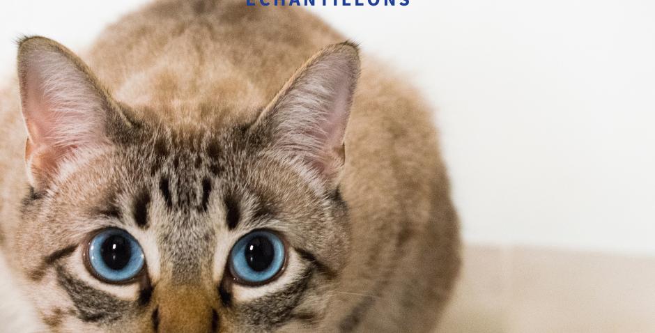 NourriCru - Bon départ pour chat ÉCHANTILLONS CRUS
