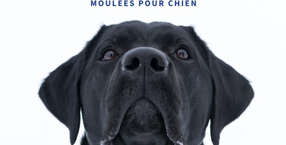 NourriCru - Bon départ pour chien ÉCHANTILLONS MOULÉES