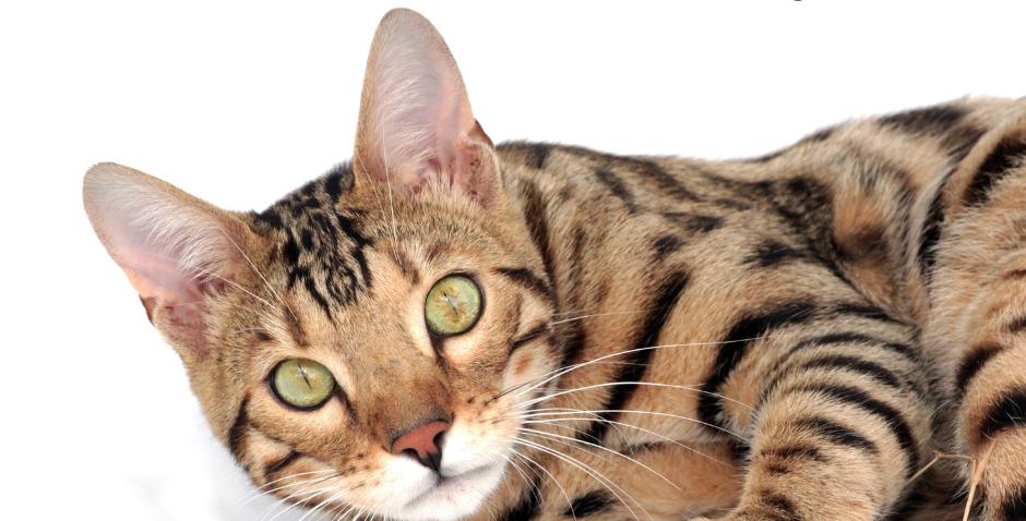 NourriCru - Bon départ pour chat ÉCHANTILLONS CRUS HYPOALLERGÉNIQUES