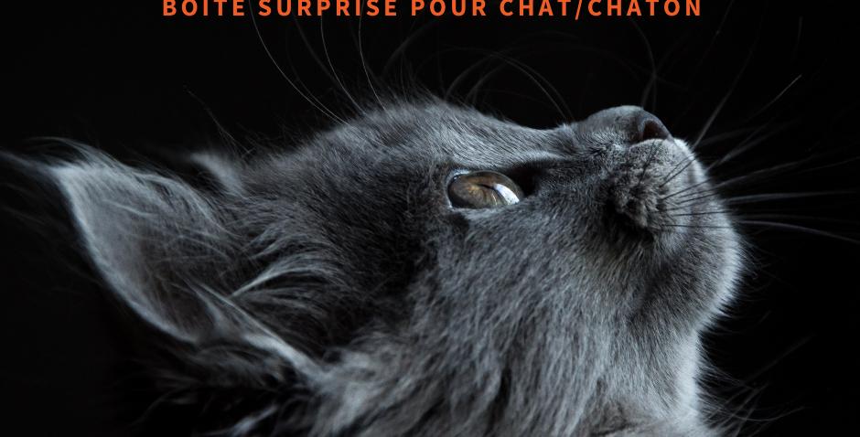 NourriCru - Boîte surprise pour chat et chaton