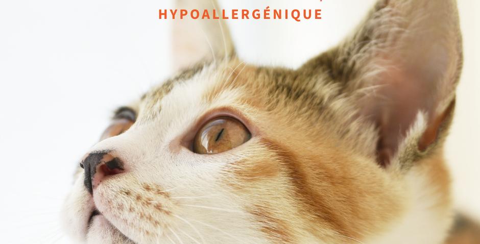 NourriCru - Boîte surprise hypoallergénique pour chat et chaton