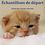 Thumbnail: NourriCru - Bon départ pour chaton ÉCHANTILLONS MOULÉES
