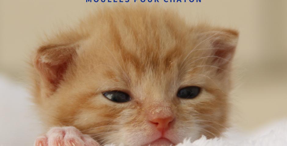 NourriCru - Bon départ pour chaton ÉCHANTILLONS MOULÉES