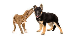 puppy greet.jpg