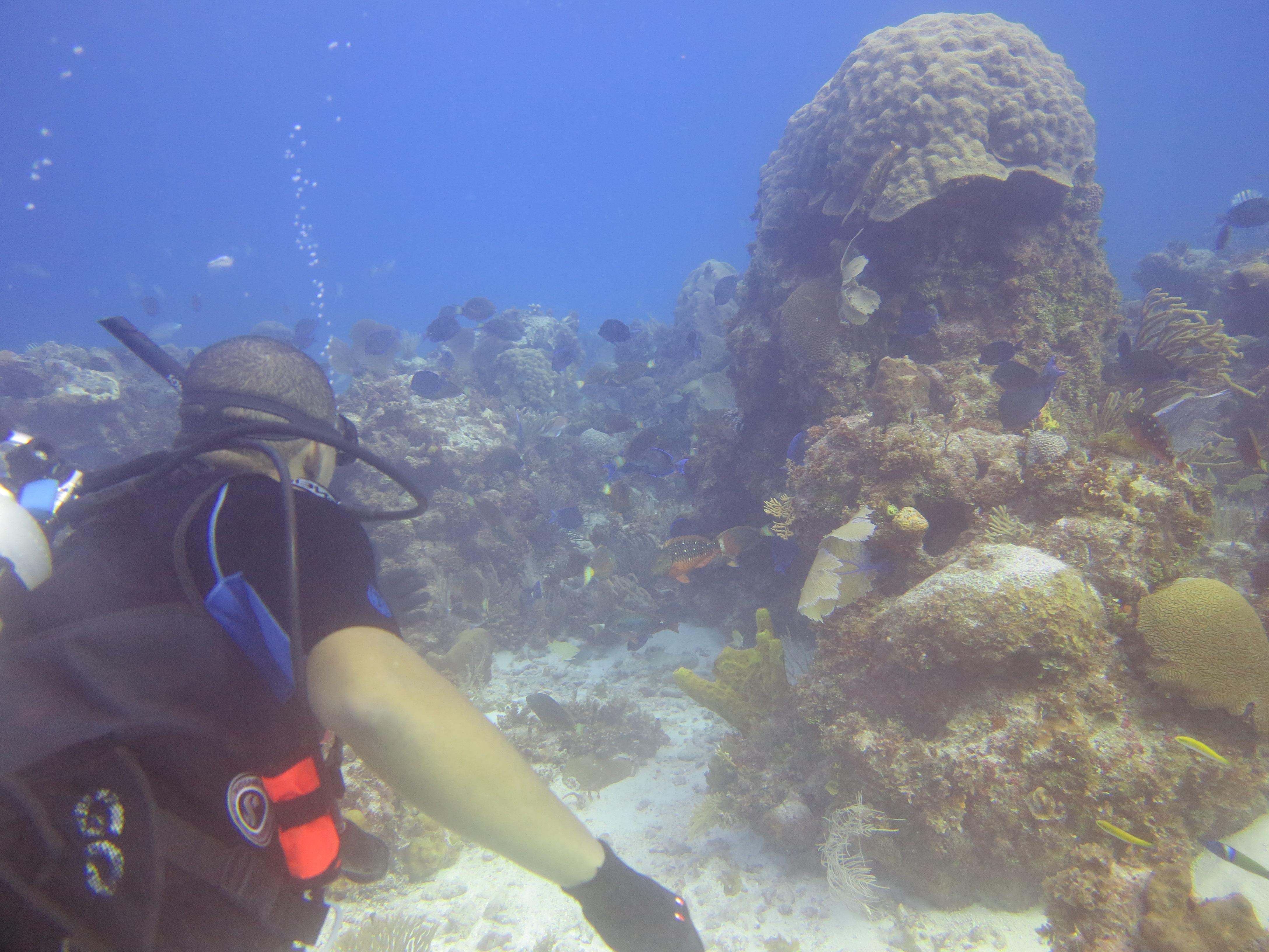 Winston Rock Reef