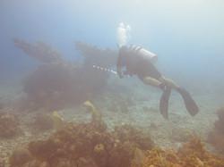 Fish survey on Parrot Reef