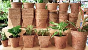 Growing on coir