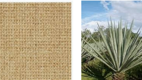 What is Sisal Carpet?