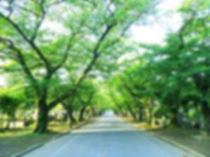 yanakareien_edited.jpg