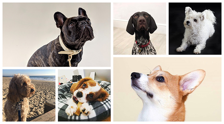 Walker Agency Dogs