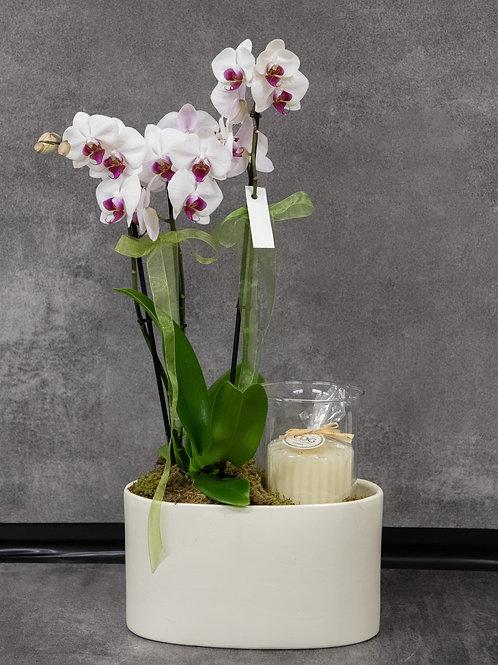 Orchidea con candela