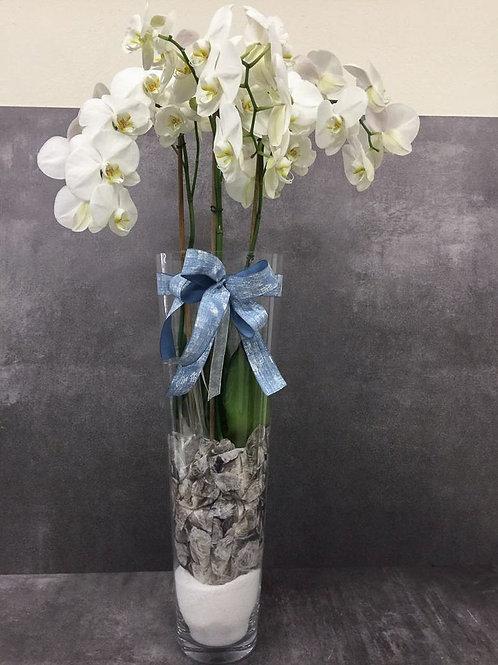 Composizione di Orchidee con vaso
