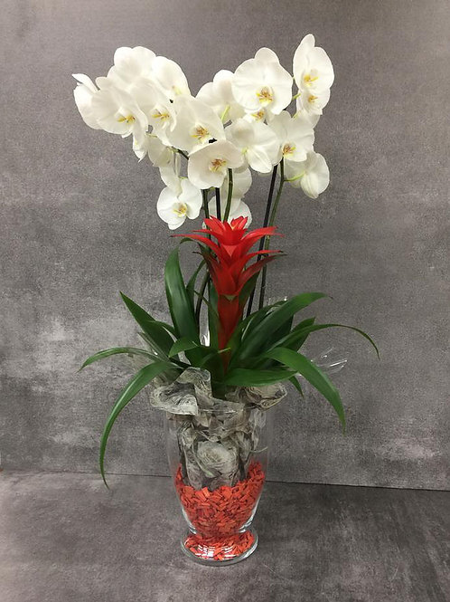 Orchidea con vaso