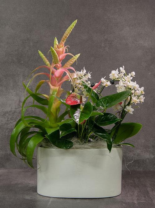 Composizione piante miste