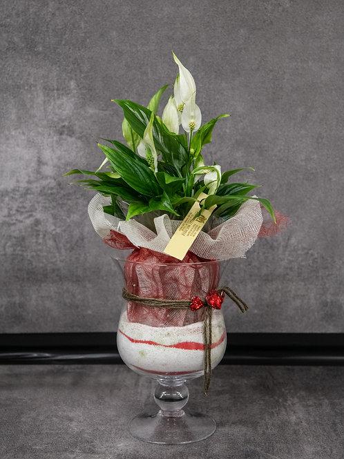 spathiphyllum con vaso