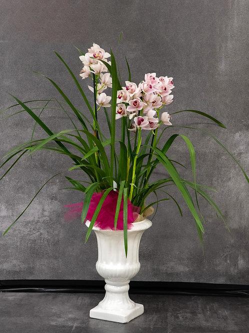 Orchidea cymbidium con vaso