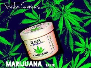 Chicha Gout Marijuana CBD
