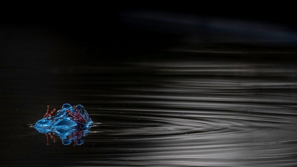20180419-2018_09 Vatten grodor VINST.jpg