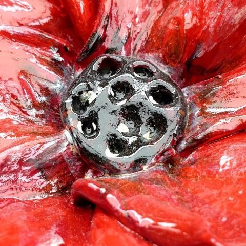 double poppy c.jpg