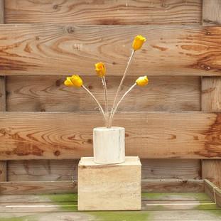 tulip joy