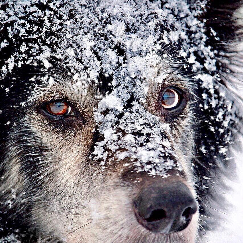 Crescent Moondog